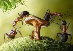 приснились черные муравьи