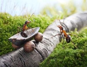 видеть во сне муравья с крыльями