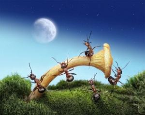 видеть во сне муравьев