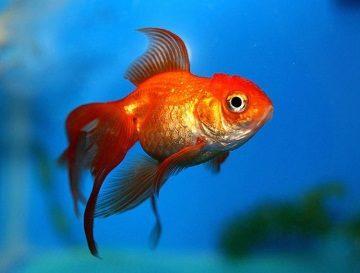 приснилась рыба женщине
