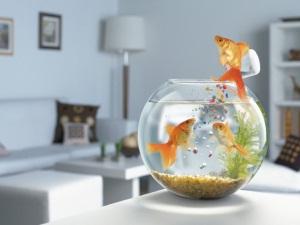 увидеть во сне рыбу