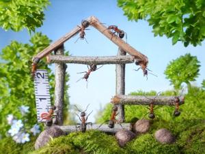 снятся муравьи в доме