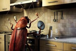 снятся тараканы мужчине