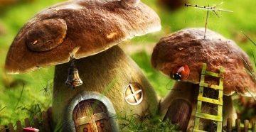 грибы видеть во сне