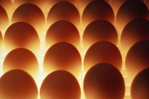 снятся разбитые куриные яйца