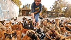 к чему снятся кошки много кошек