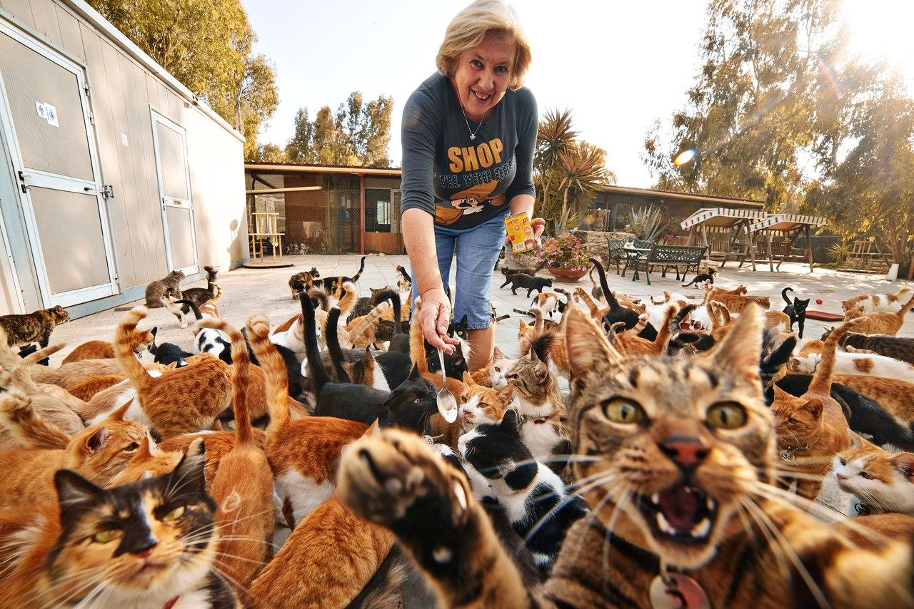 девушки чему к много снятся кошек для