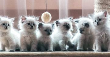 к чему снятся котята много маленьких