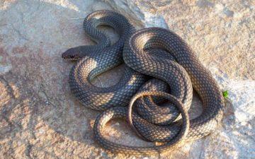 к чему снятся убитые змеи
