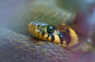 к чему снятся змеи мужчине