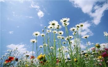 снятся живые цветы во сне мужчине или женщине