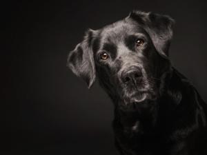 видеть во сне кусающую черную собаку