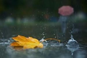 увидеть во сне дождь что значит