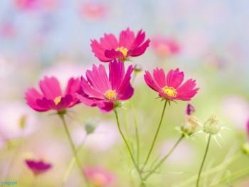 видеть во сне живые цветы