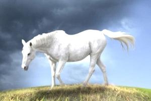 что говорит сонник ванги о сне с лошадью
