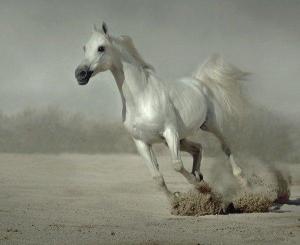 что говорит английский сонник о сне с лошадью