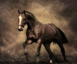 что говорит миллер о сне с лошадью