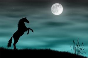 к чему снится лошадь девушке