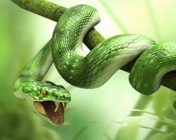 к чему снятся змеи женщине