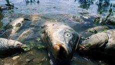 к чему снится мертвая рыба