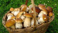к чему снятся собранные грибы
