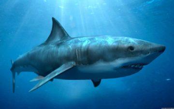 к чему снится акула в воде