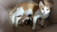к чему снится что кошка родила
